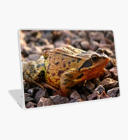 Toad on the Rocks Laptop Skin