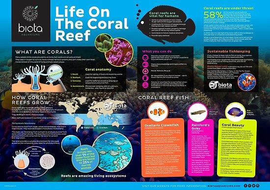 Korallenriffe von biotaaquariums