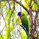 Lorikeet for Sebastian by Ronald Rockman