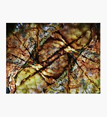 Nature Abstract Photographic Print