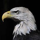 Eagle Head by Lynda   McDonald