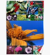 A collage of Israeli wild flowers Poster