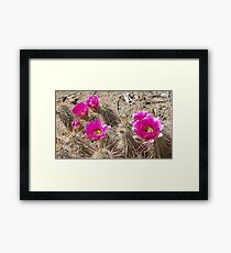 Cactus Contrasts Framed Print