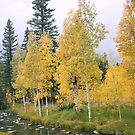 Aspens in Utah by goldnzrule