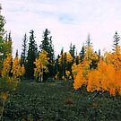 Aspens on Cedar Mountain by goldnzrule