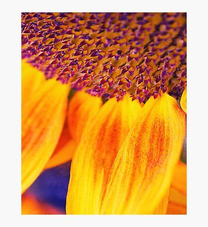 Sunflower III - Ipad case by Silvia Ganora Photographic Print