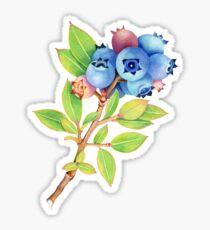 Wilde Maine-Blaubeeren Sticker