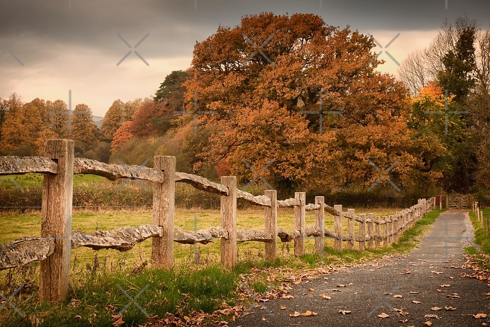 Rustic wooden fence by Leighton Collins
