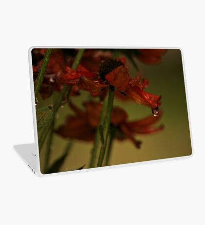 Red daisy in Rain Laptop Skin