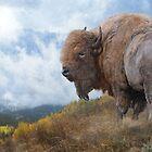 golden bison by R Christopher  Vest