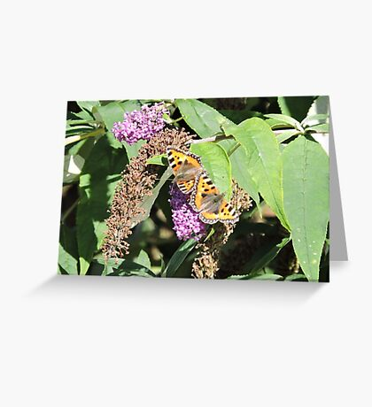 How Things Change Greeting Card