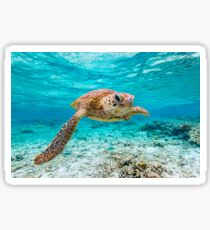 Green Turtle Sticker