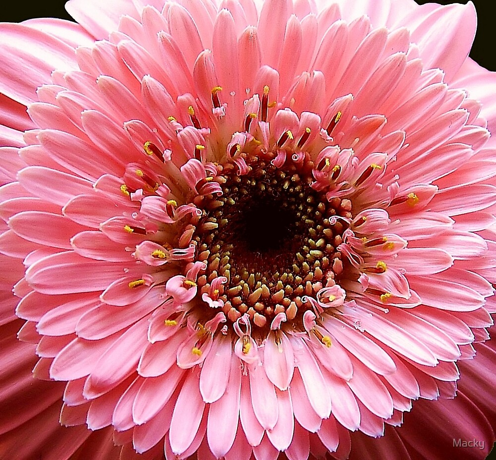 In the Pink!! by Macky