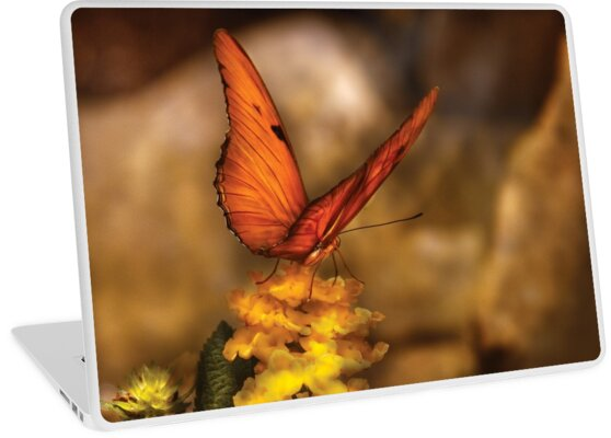 Butterfly - Just a bit of orange  by Michael Savad