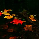 Fall Colours by jules572