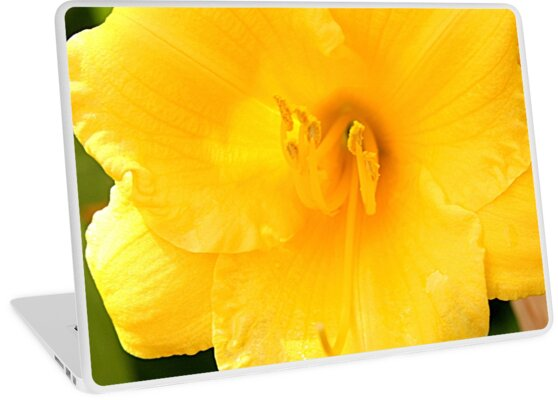 Yellow Day Lily by Jean Macaluso
