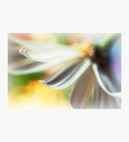 The petal II Photographic Print