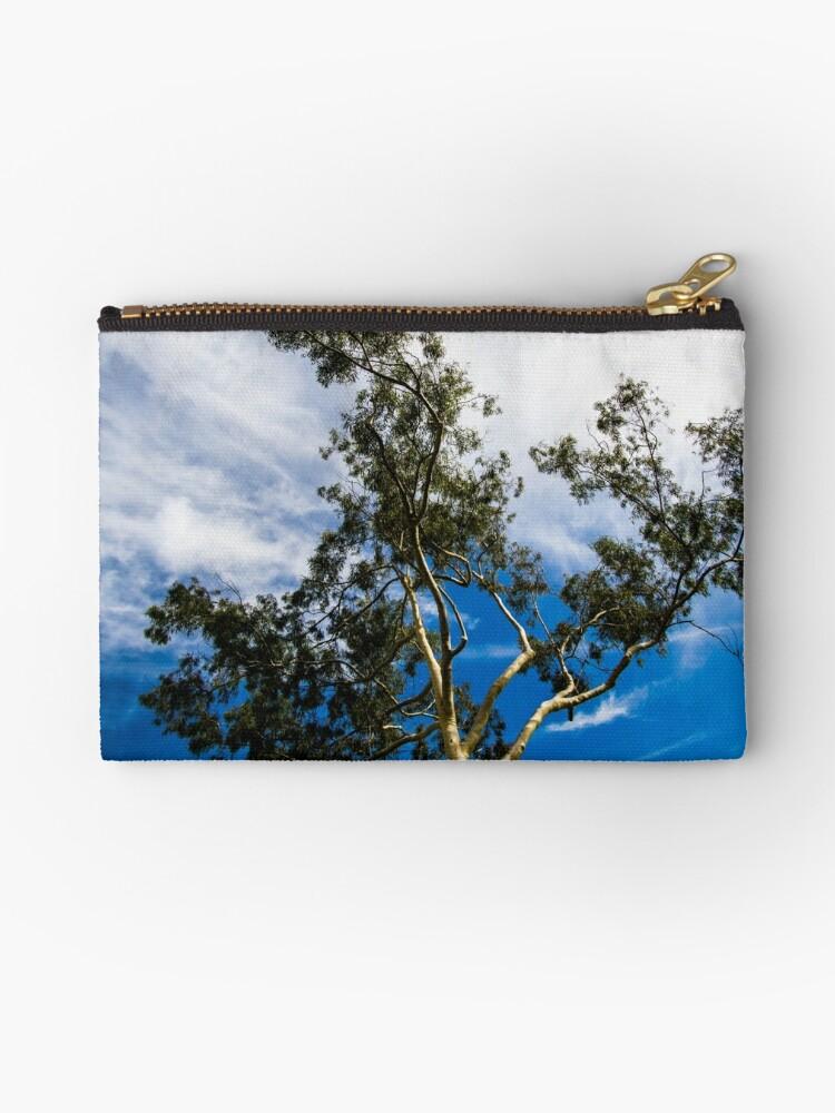 Eucalyptus by Brian Haidet