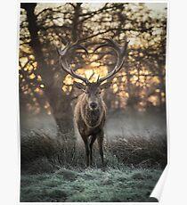 Love you Deer Poster