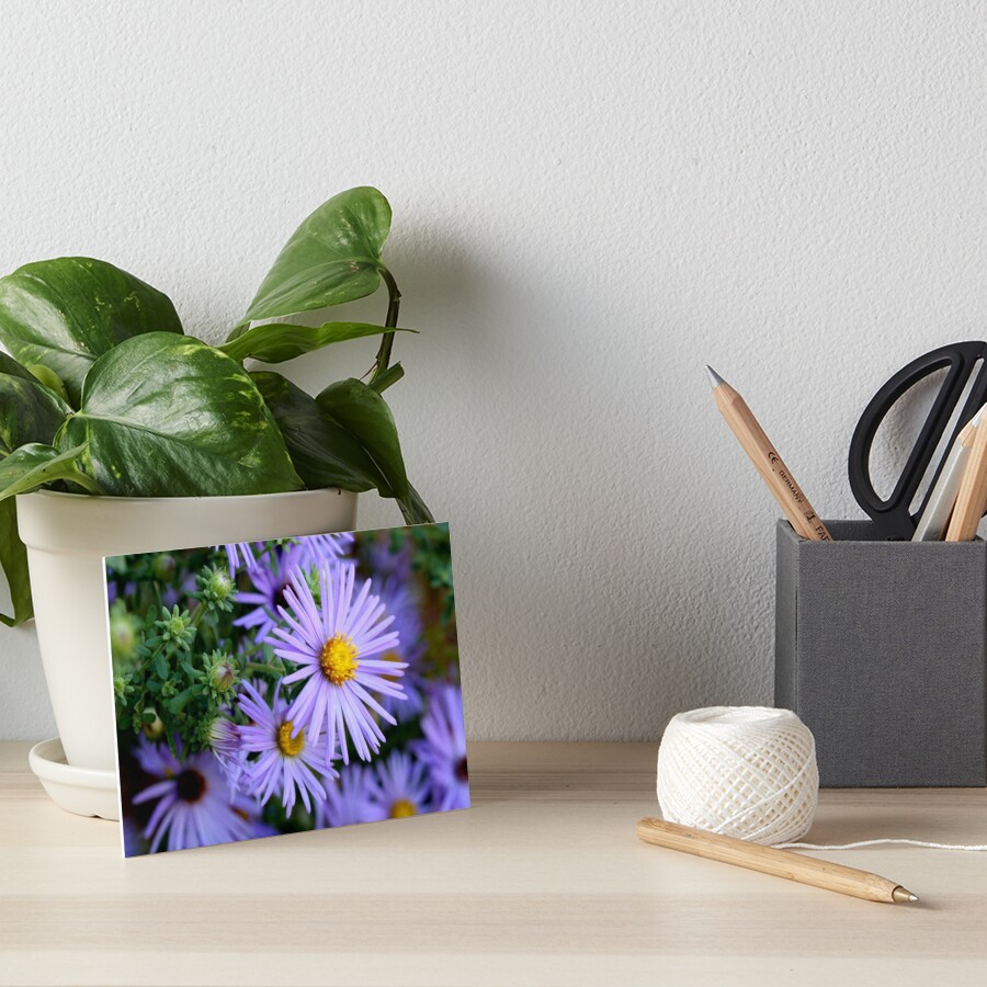 Studio Dalio - Hardy Blue Aster Flowers Art Board