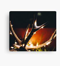 Deer Antlers with String Lights Canvas Print