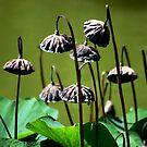 Lotus I by loiteke