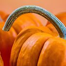 Pumpkin with graceful stem by Celeste Mookherjee