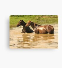 """""""Horses with Attitude no. 6,  'Yo, Stud, Ya Gettin' On My Last Nerve!'""""... prints and products Canvas Print"""