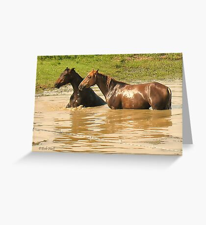 """""""Horses with Attitude no. 6,  'Yo, Stud, Ya Gettin' On My Last Nerve!'""""... prints and products Greeting Card"""