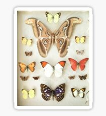 Butterflies and Moths Sticker