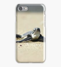 Chelonia mydas, green turtle after hatching on their first voyage to the Mediterranean Sea iPhone Case/Skin