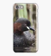 Little Grebe (Tachybaptus ruficollis) floating among the reeds. iPhone Case/Skin