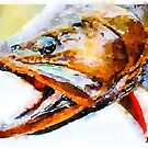 Cut Throat Trout  by Statepallets