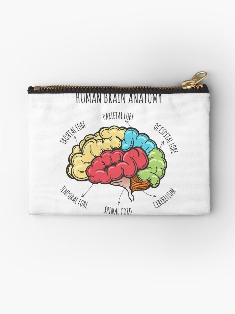 Anatomie des menschlichen Gehirns Skizze\