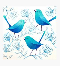 Bluebirds Photographic Print