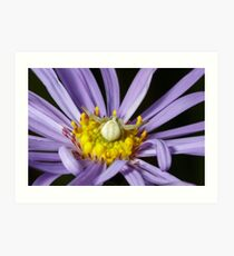 A Crab Spider (Misumena vatia) laying in wait on a Purple Aster flower for an unsuspecting bee or fly. Art Print