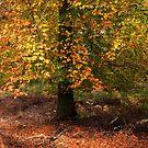 Autumn Colours on Cannock Chase by Ann Garrett