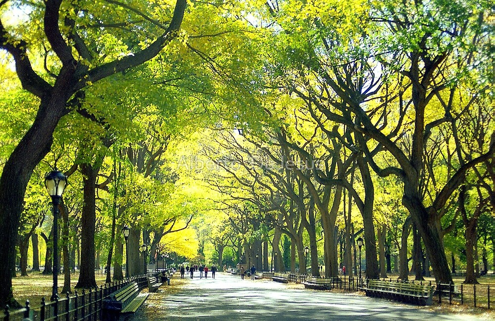 Avenue of Trees - Central Park by Alberto  DeJesus