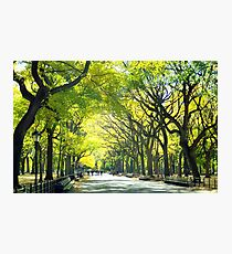 Avenue of Trees - Central Park Photographic Print