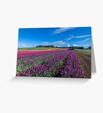 Tulip Fields Greeting Card