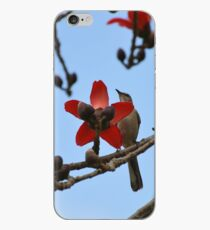 Mockingbird on a cotton tree 2 iPhone Case