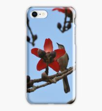 Mockingbird on a cotton tree 2 iPhone Case/Skin