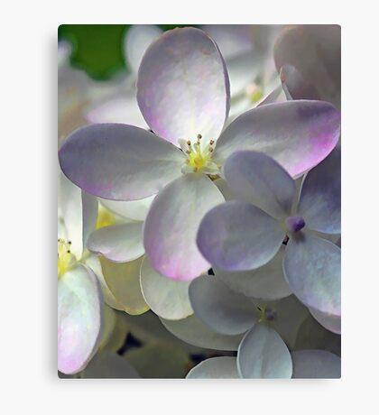 Fall Hydrangea Blossom Canvas Print