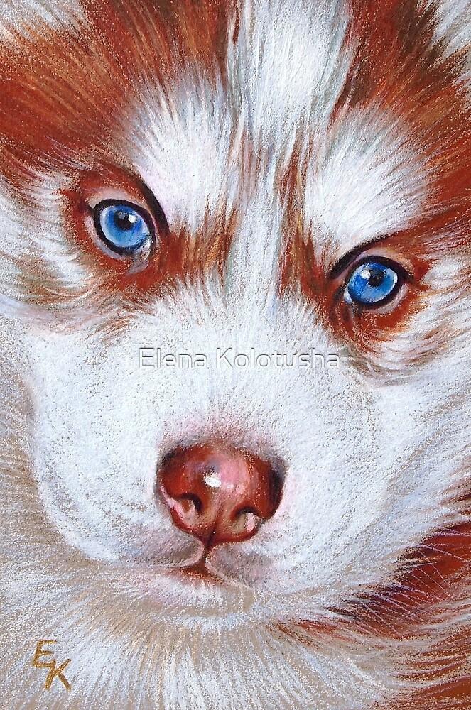 Husky pup by Elena Kolotusha