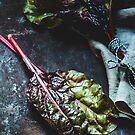 Mangold auf dunklem Untergrund by AugenBlicke
