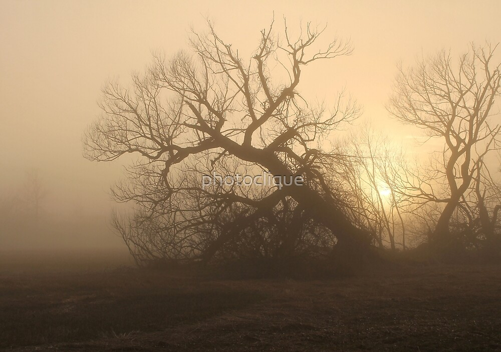 Trees in the Mist  by photoclique