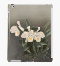 Reichenbachia Orchids illustrated and described by F. Sander 1888 V1-V2 081 iPad Case/Skin