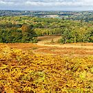 Ashdown Forest in Autumn by Stephen Frost