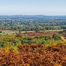 Panorama of Ashdown Forest in Autumn  by Stephen Frost