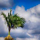 palm tree in the sky... by Wieslaw Jan Syposz